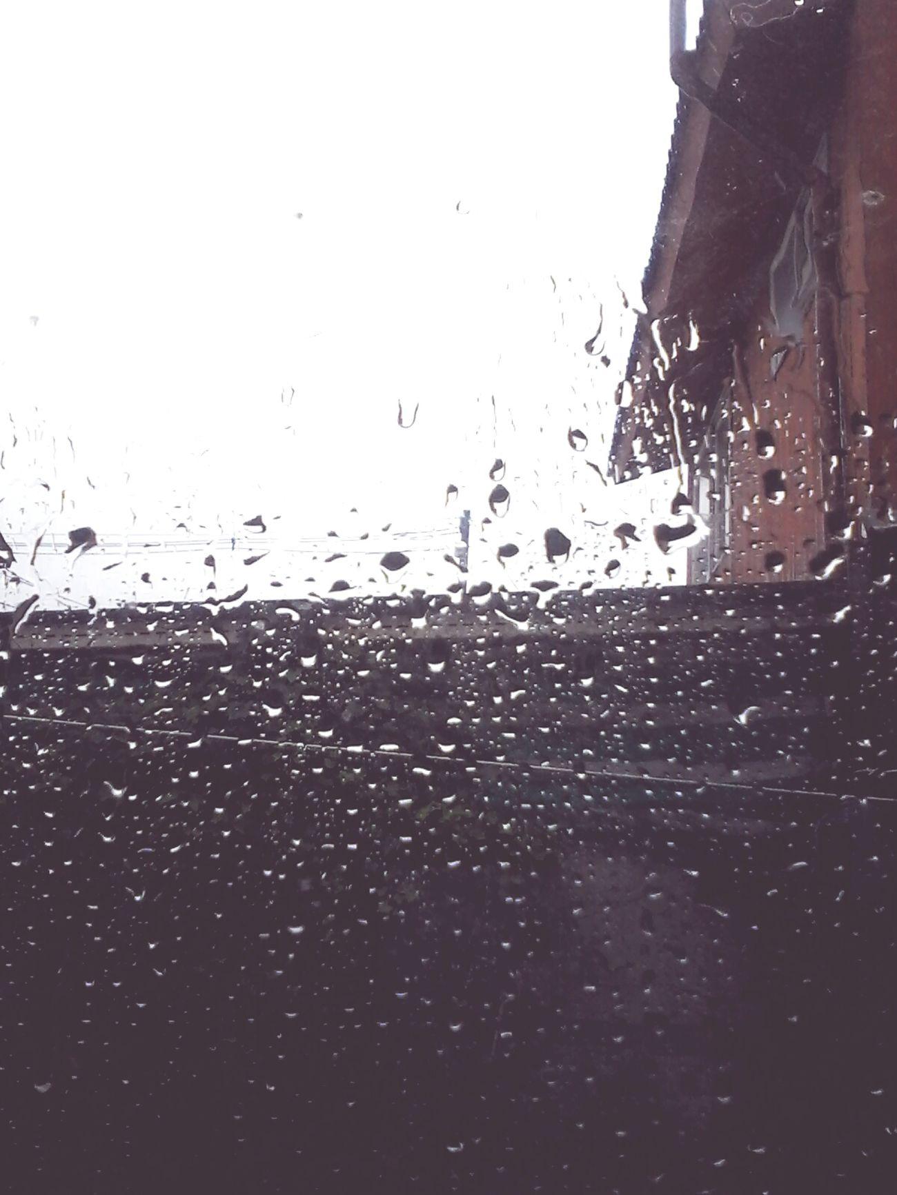 ~~ Rainy ~~ ~~ Lluvias ~~