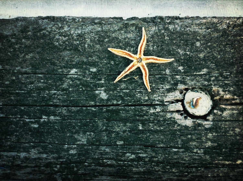 Starfish  , Sea