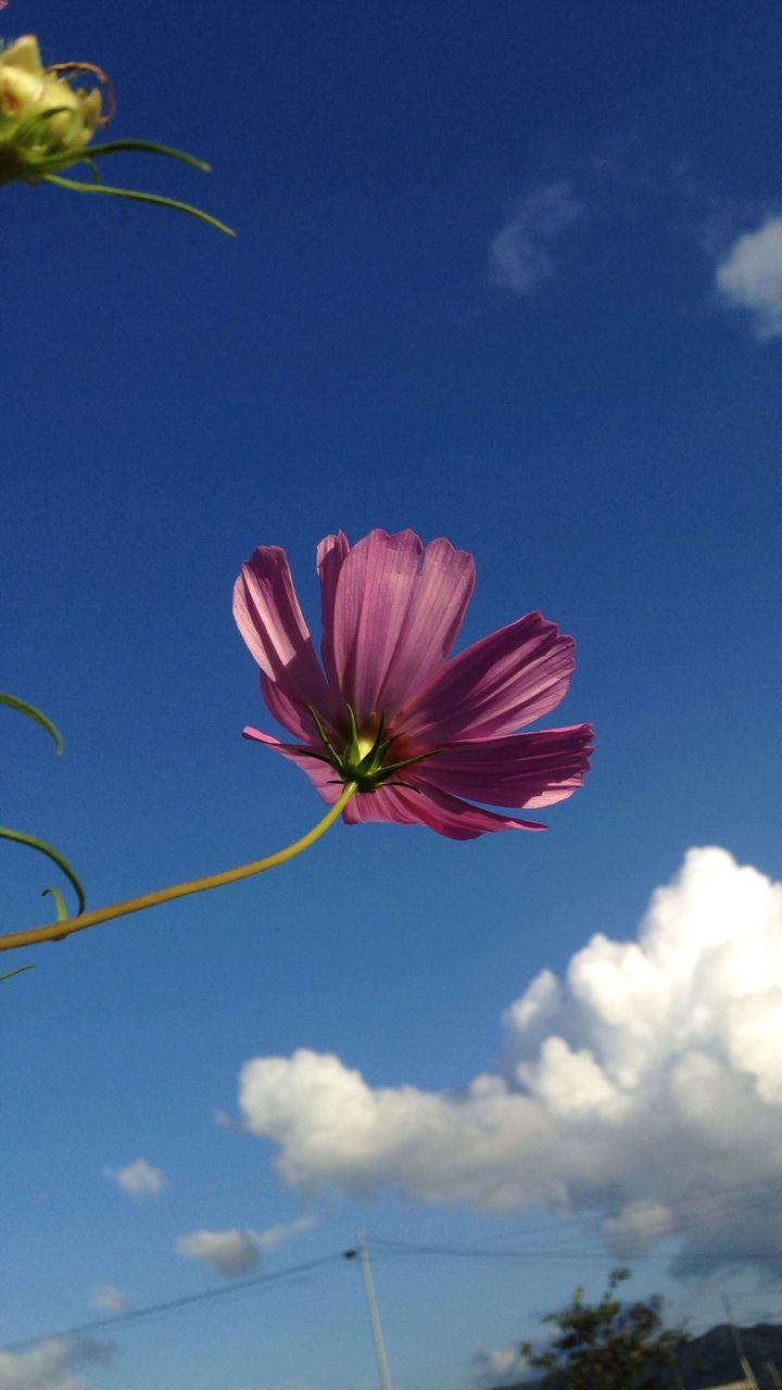 Low Angle View Of Flower