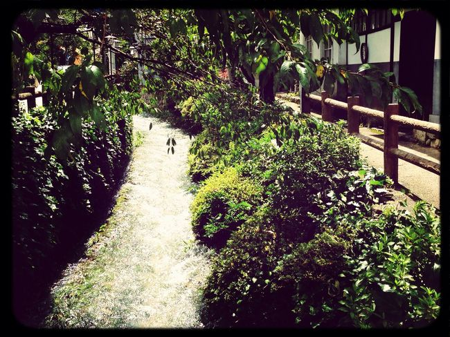IPhoneography Traveling Nature Summertime