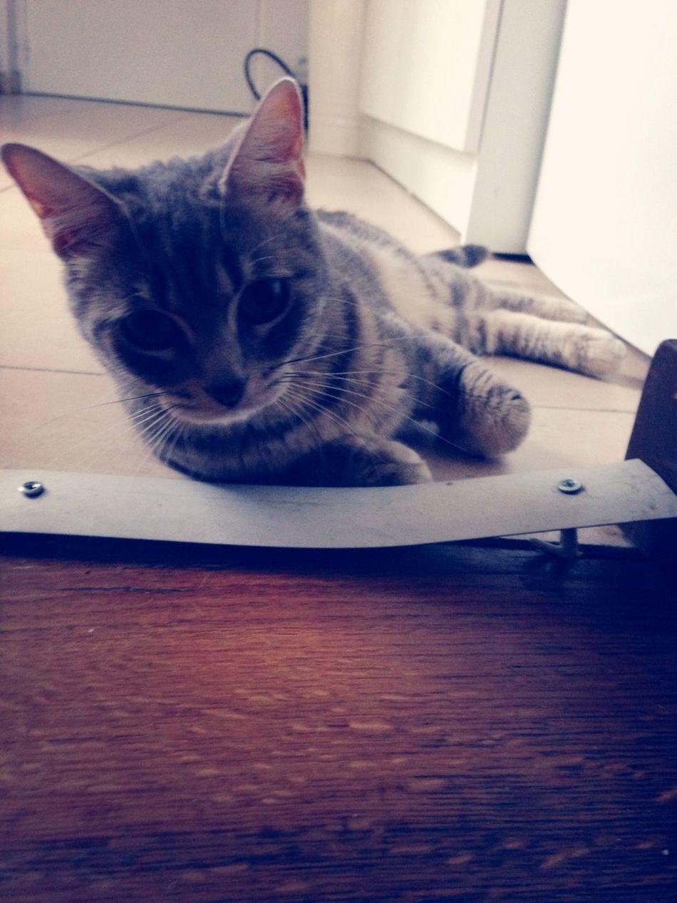 Cat I Love My Cat Houna