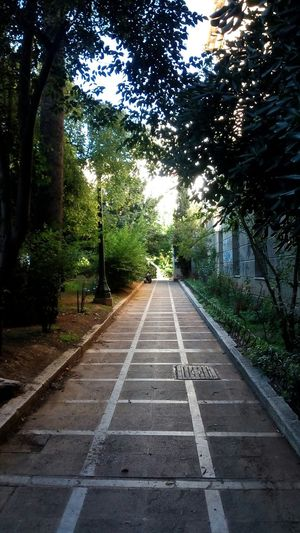 Green Orange Early Morning Trees Pathway Leaves Shadows & Lights Beautiful Nature Urban Nature Leaves Figure Athens Athens, Greece