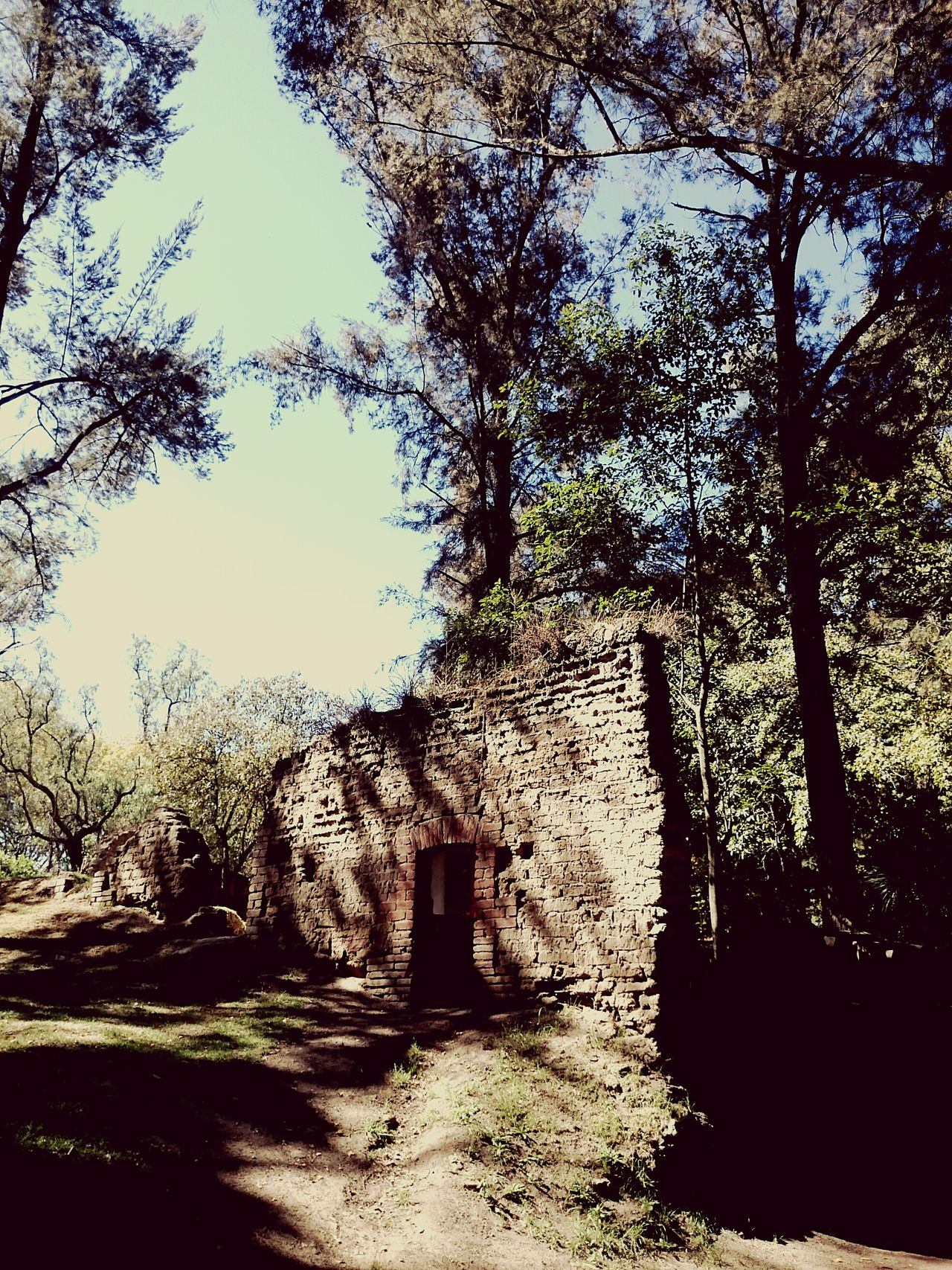 Forestwalk Forest Trees And Nature Trees Wall Old Buildings Puebla Ex Hacienda De Chautla Chautla Woods