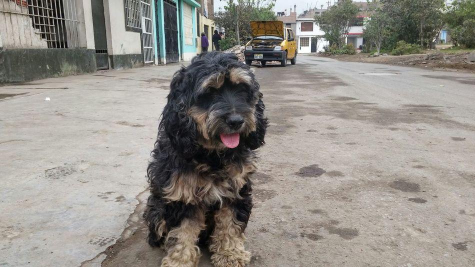 En adopcion en Peru Tada Community Moments Loveit Dogslife Dogs Of EyeEm Dogselfie Dogs Dogs Dogs Dogstyle EyeEm Dogs Dogs Life dogs in adoption