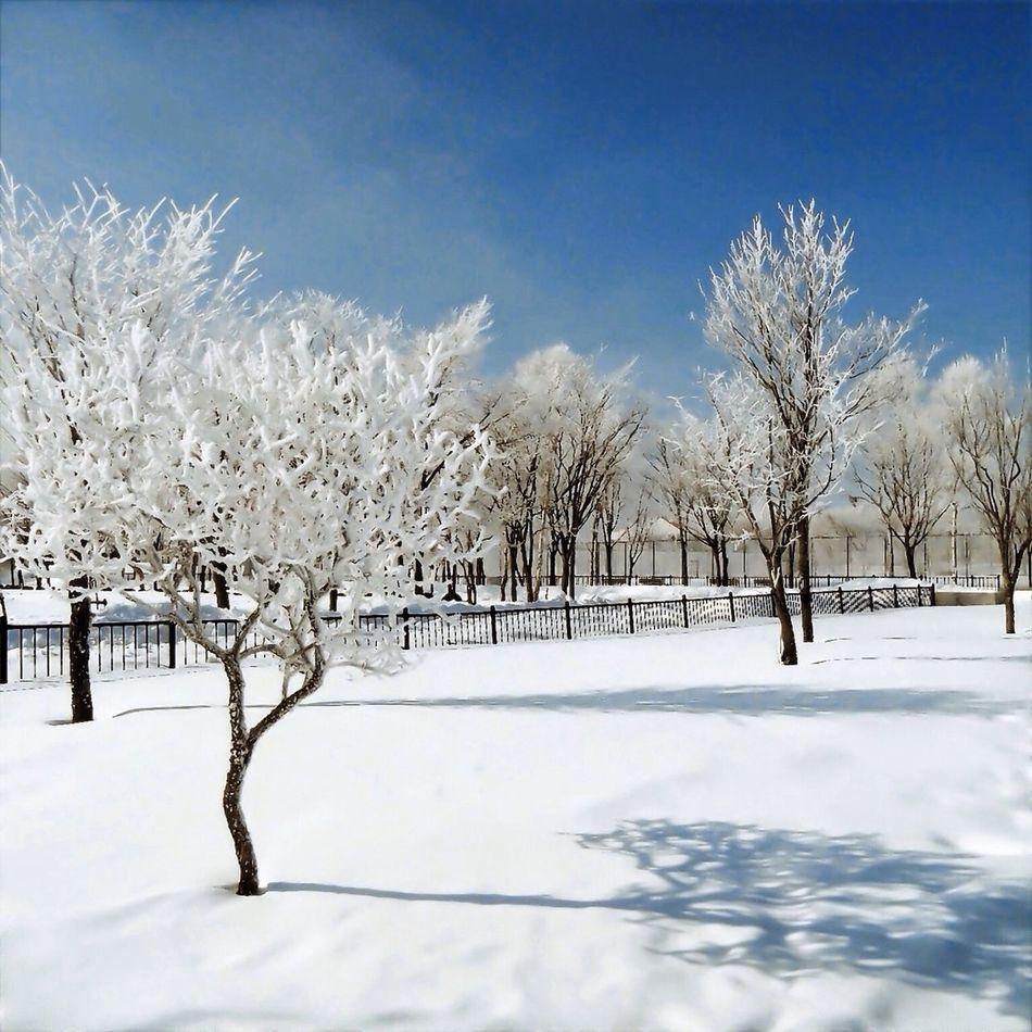 #nature #landscape #snow #tree #shadow #sky #park #winter