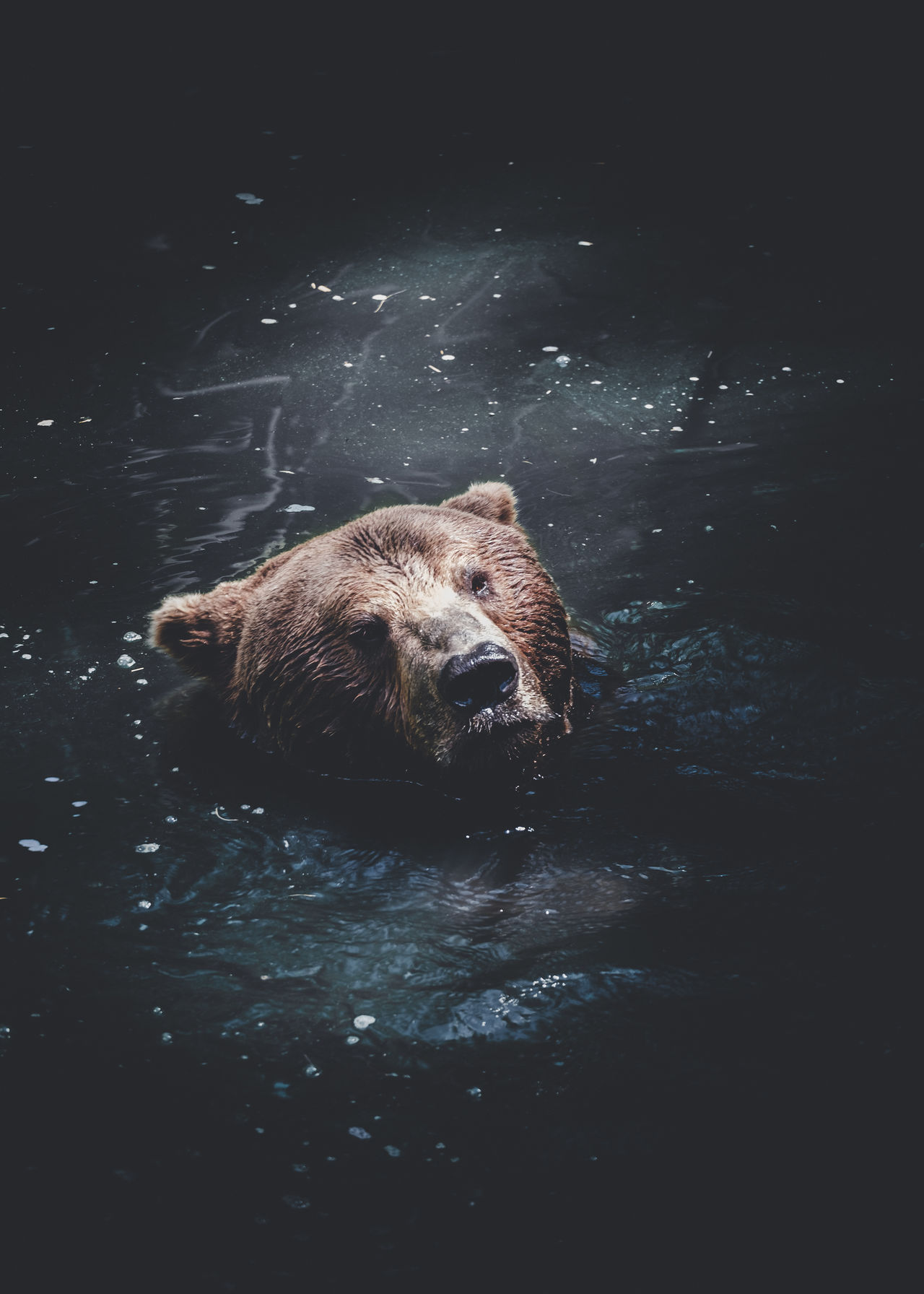 Hello. Equipment: Fujifilm X-T1 + XF18-55 www.instagram.com/nils_leithold www.facebook.com/nleithold.photography Alaska Animal Wildlife Bear Brown Brownbear Day Ear EyeEm Best Shots Eyes Face Fuji Grizzly Mammal Motion Nature No People One Animal Out Outdoors Water Wilderness Wildlife