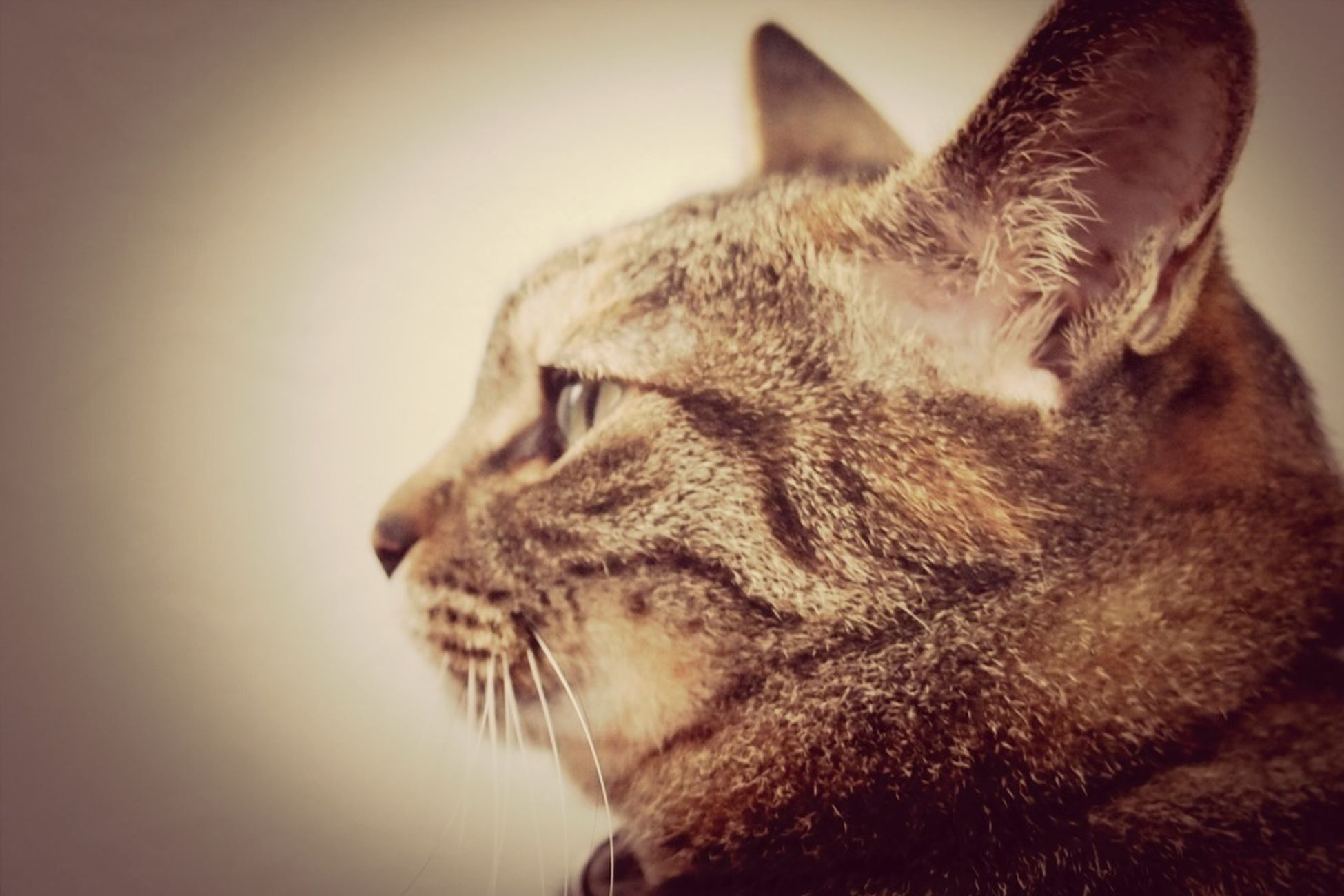 pets, one animal, domestic animals, animal themes, mammal, domestic cat, indoors, cat, feline, relaxation, whisker, close-up, animal head, eyes closed, sleeping, resting, lying down, looking away, animal body part, no people