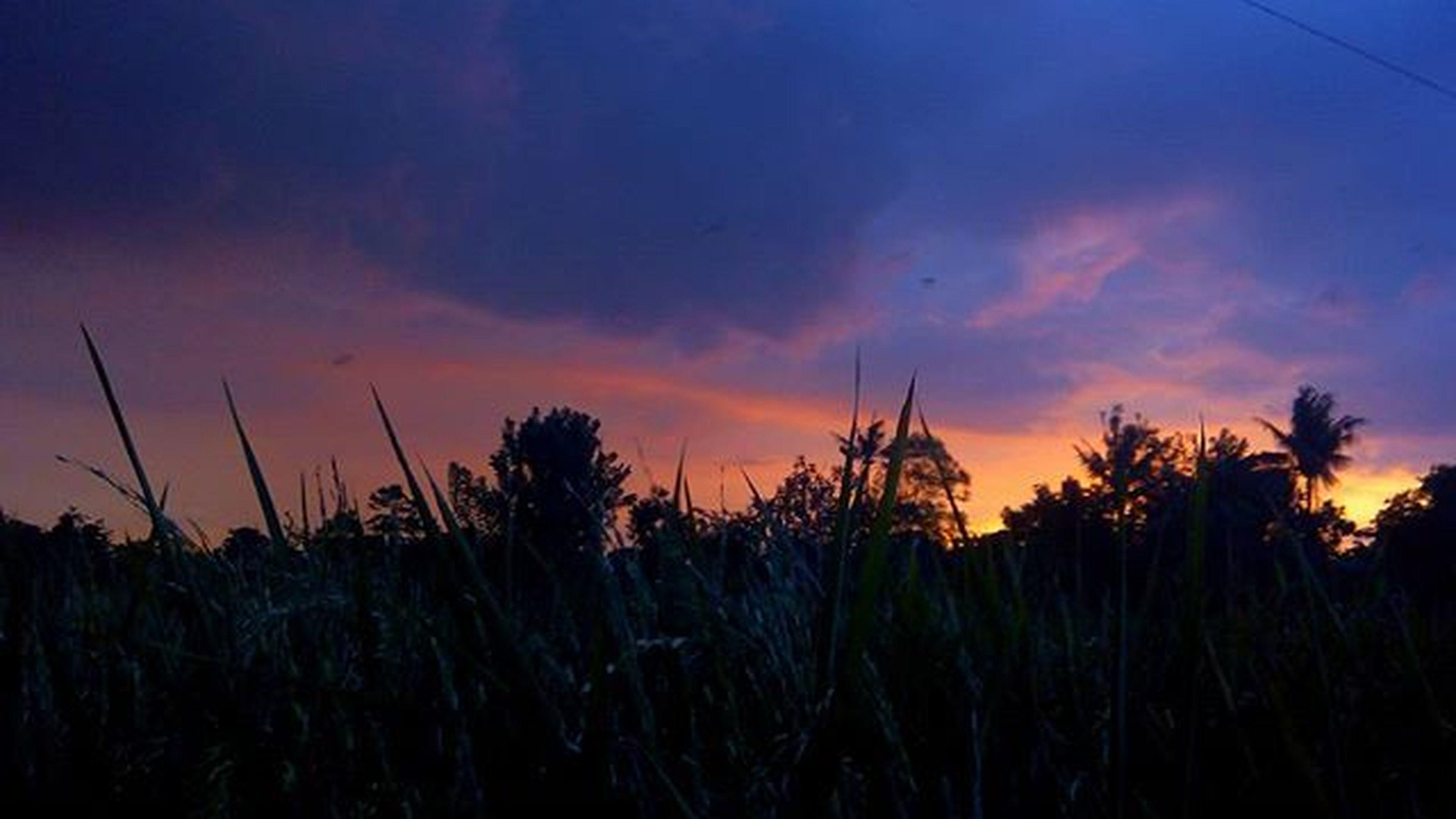 Senja  Sunset Bekasimembekasdihati 1day1klick Wepe67photography Mobilphonephotography Explore_Bekasi