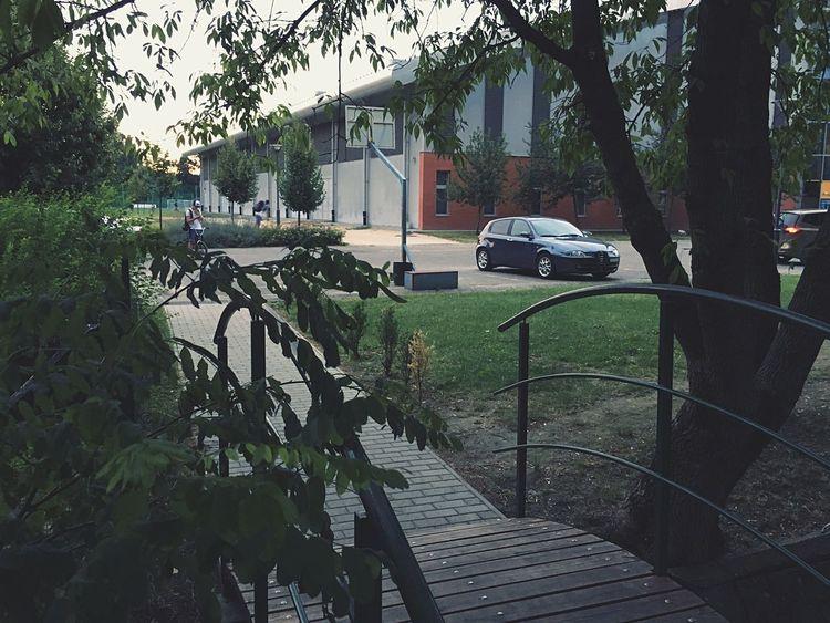 Waiting for me Alfaromeo Alfisti Hungary Tree Bridge Waiting Beautiful Italian