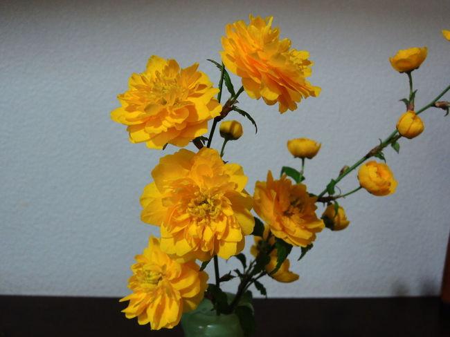 Flower Mokko Rose Yellow Rose