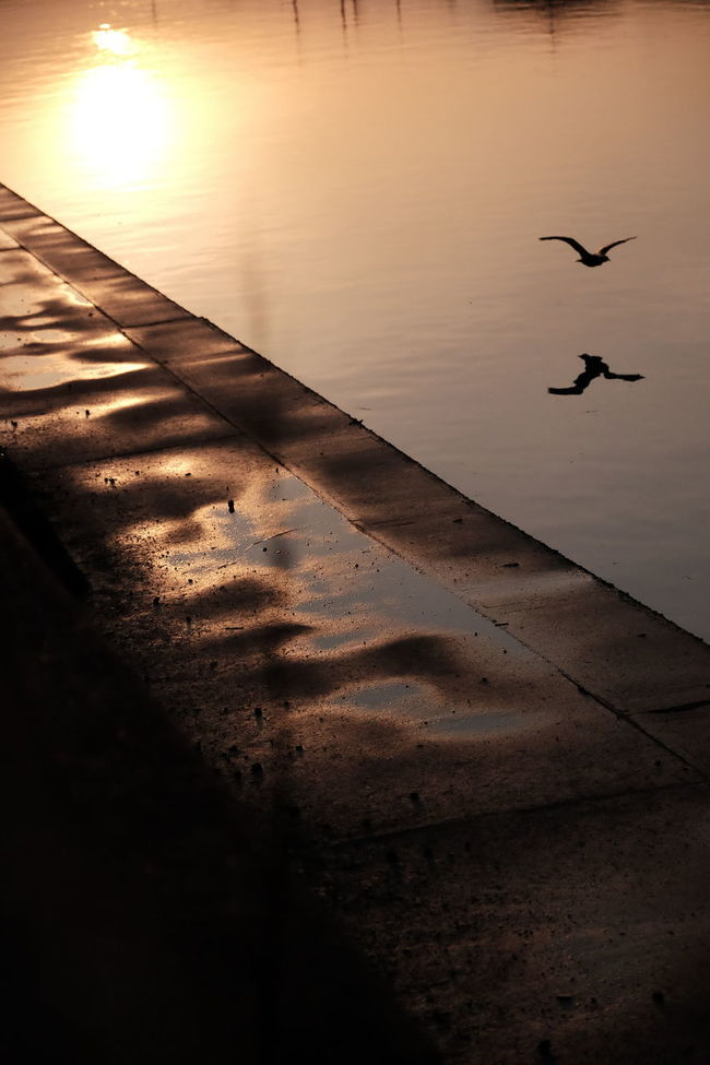 Bird EyeEm Nature Lover Light And Shadow Nature Photography Reflection River View Sunset X-T10