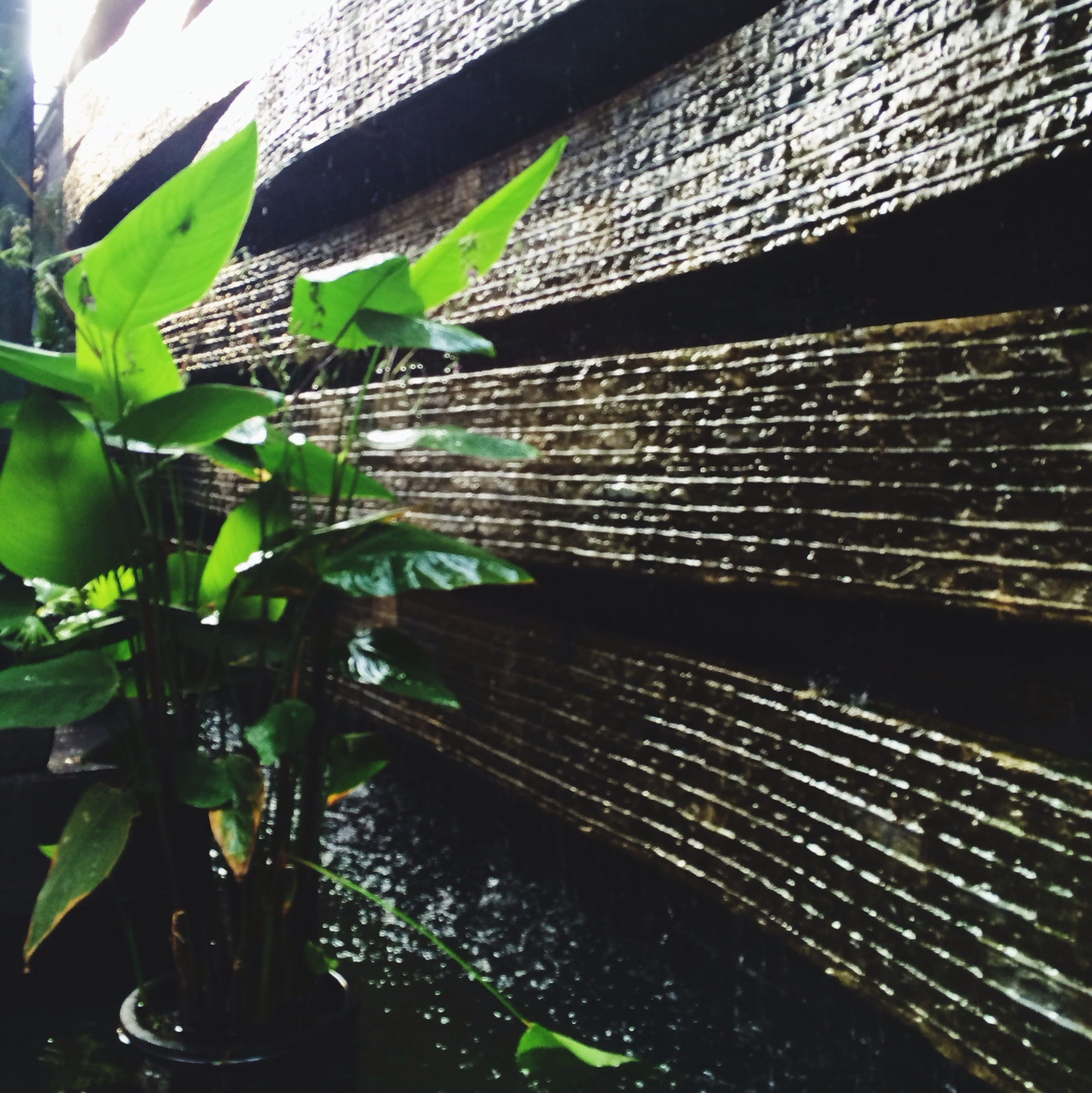 Thà làm giọt mưa... Cool Stuff People Watching Blackandwhite Streetphotography