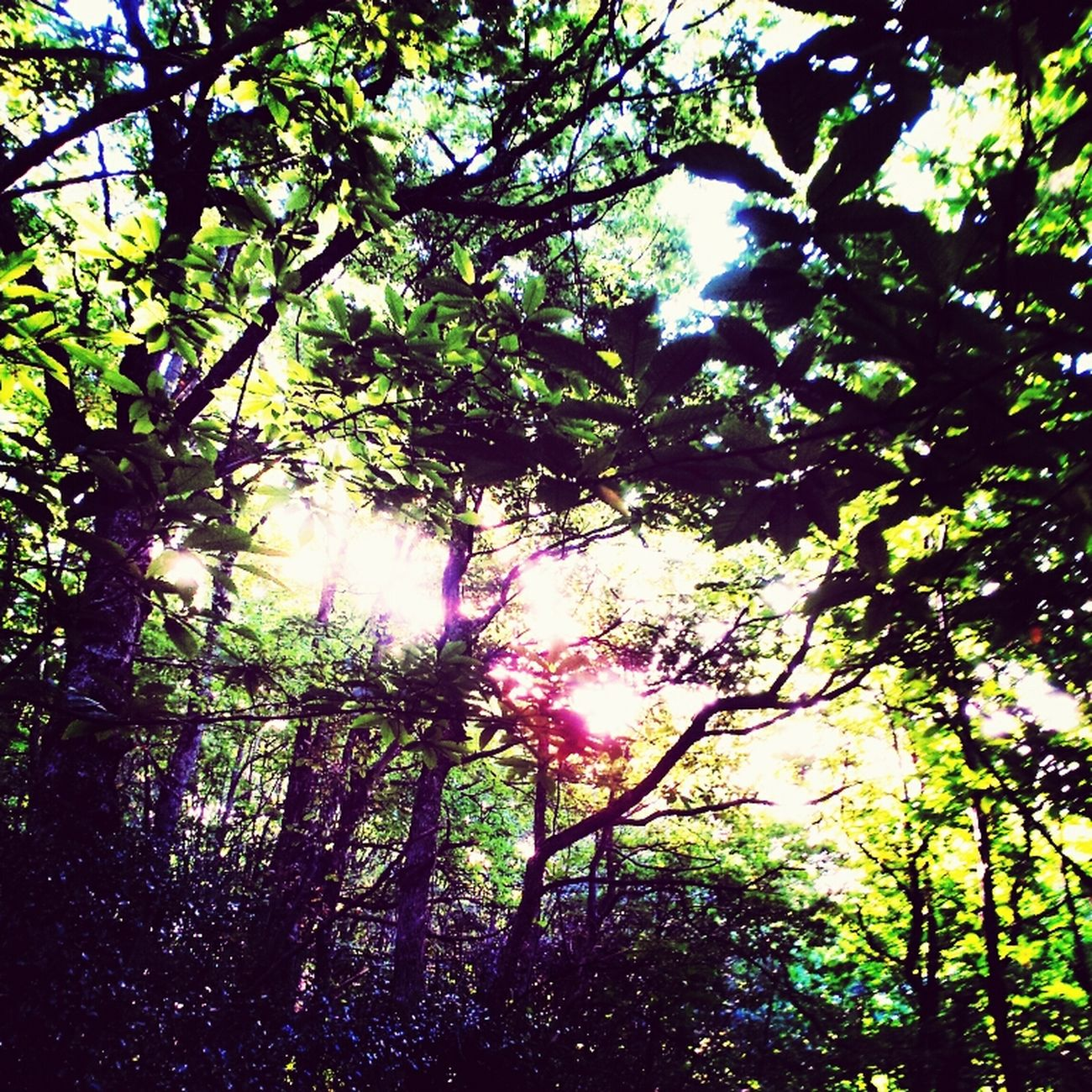 Forest Whispers My Name