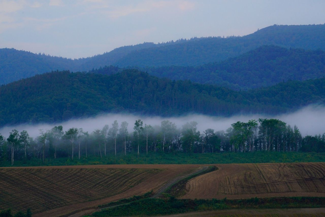 Tranquil Scene Tranquility Landscape Beauty In Nature Rural Scene Farm Tree Nature Idyllic Foggy Fog From My Point Of View Beautiful Nature Nature Getting Inspired EyeEm Best Shots - Nature Morning