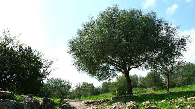Magnificentsardegna Tree Colours Riposo Nature