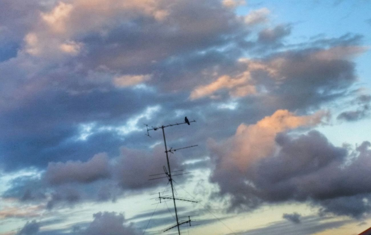 Alone Time... Birdy No People Cloudscape Beauty In Nature A Moment In Time From Wher I Stand My Cloud Obsession☁️