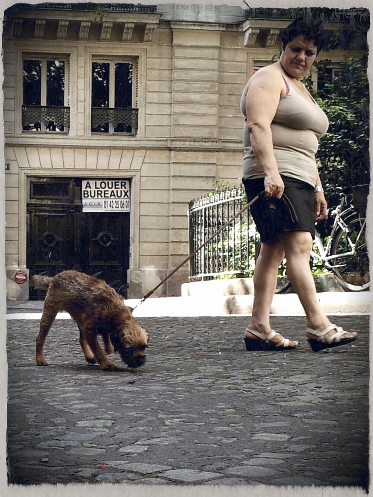 Douter de la purete raciale de son chien.. AMPt - Street Street Life Scène De Vie Streetphoto_color