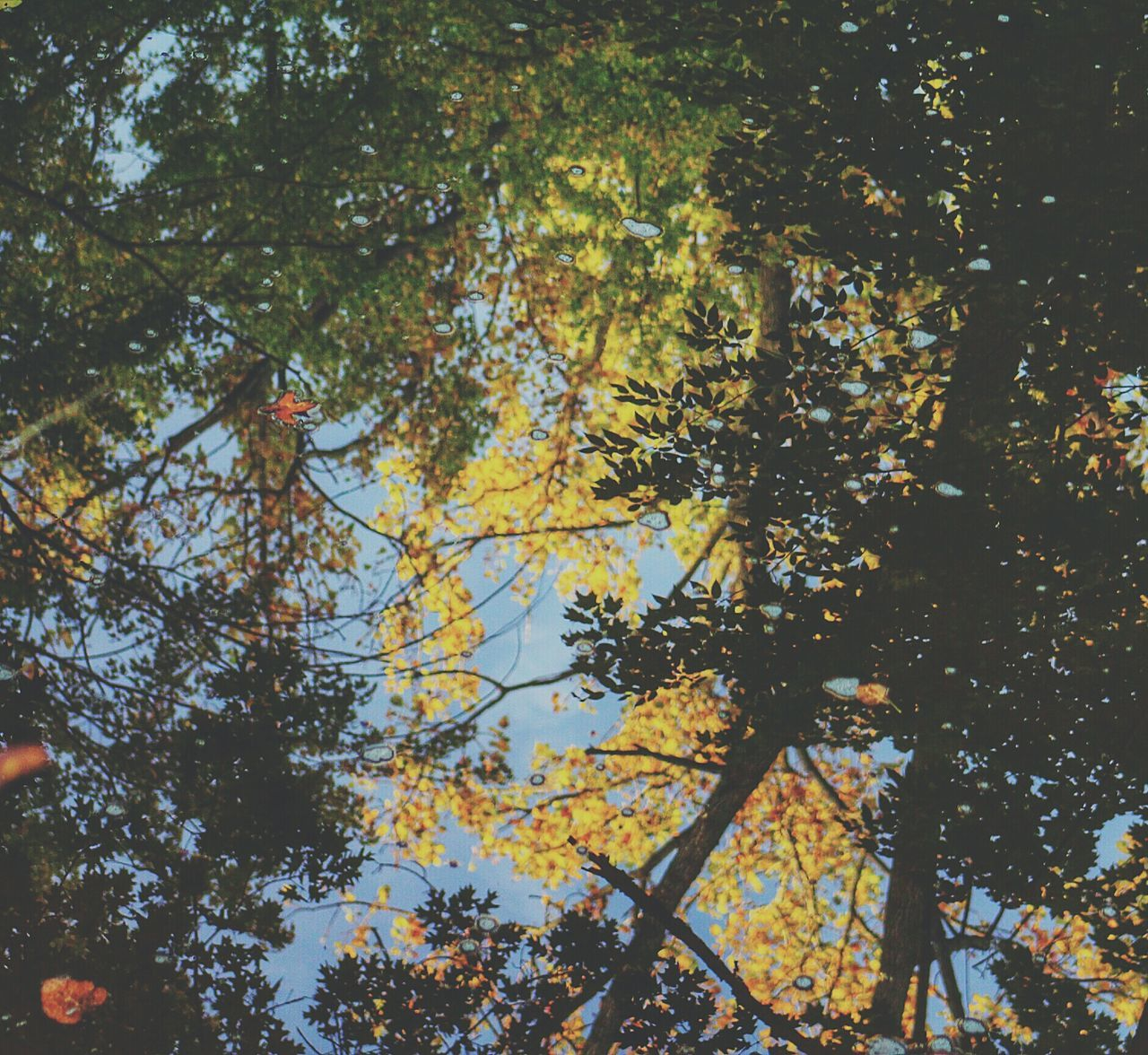 Reflection Of Trees On Pond At Park During Autumn