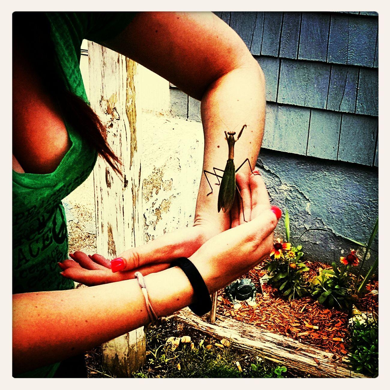 That's Me Praying Mantis Thats A Big One
