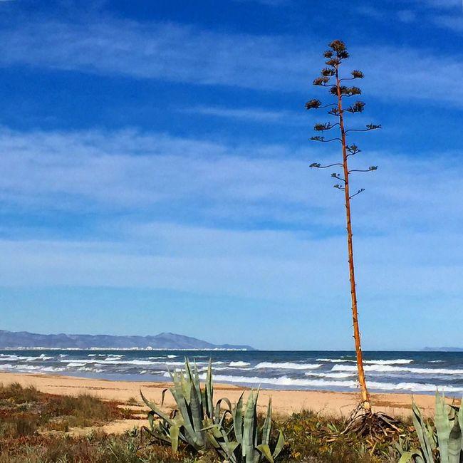 Denia Beach Landscape_Collection Beachphotography