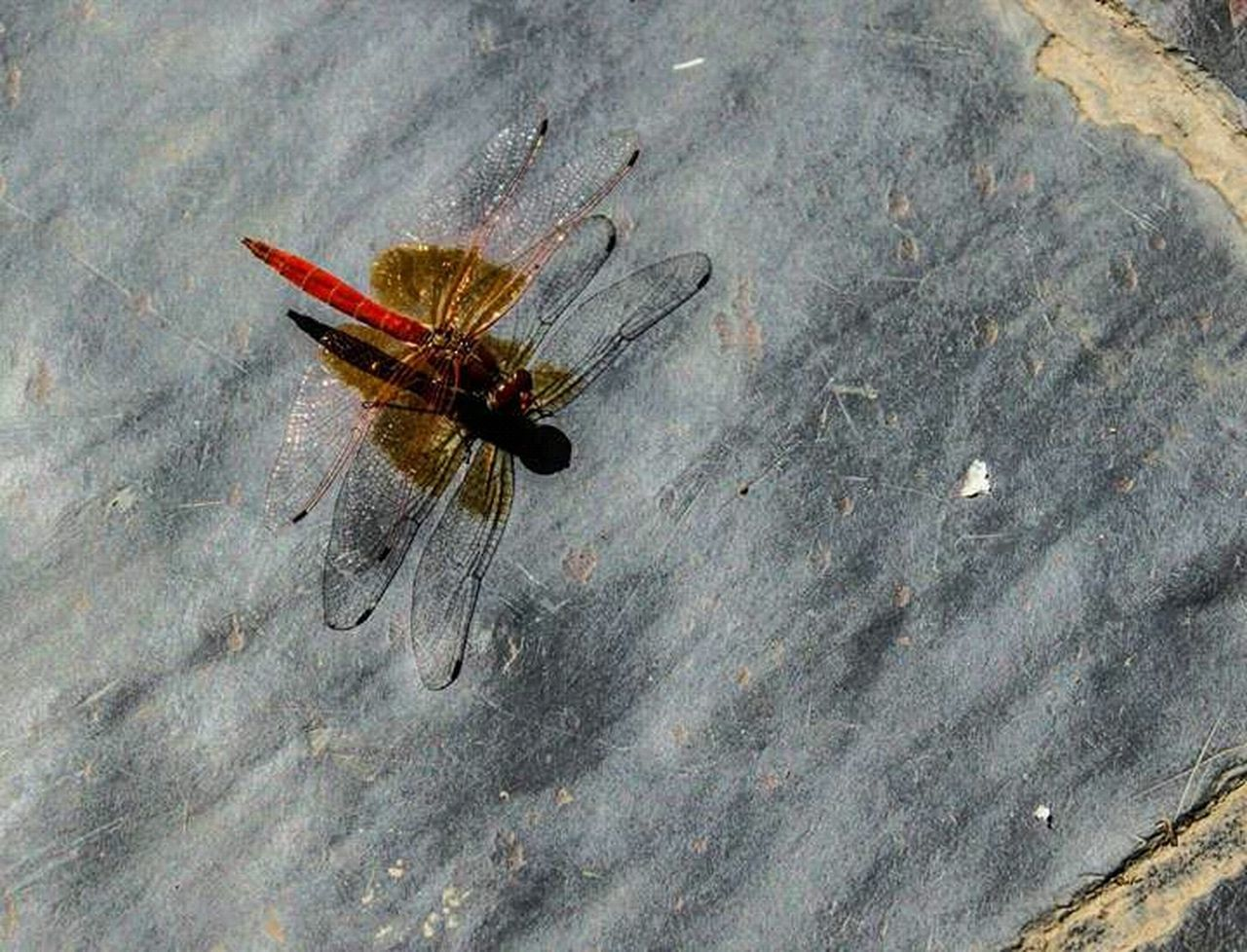 insect, animal themes, animals in the wild, one animal, day, no people, close-up, outdoors