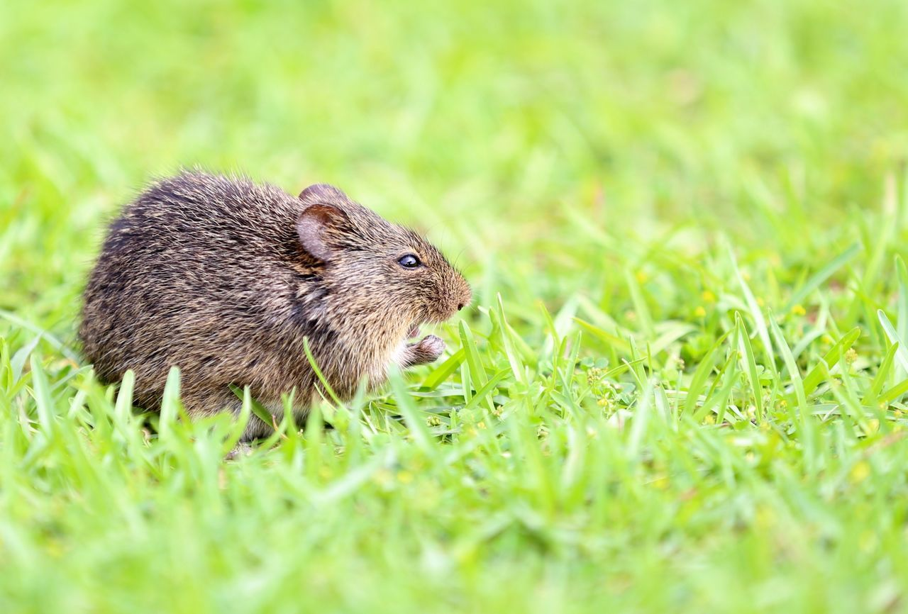 Beautiful stock photos of mouse, Animal Themes, Animals In The Wild, Day, Full Length