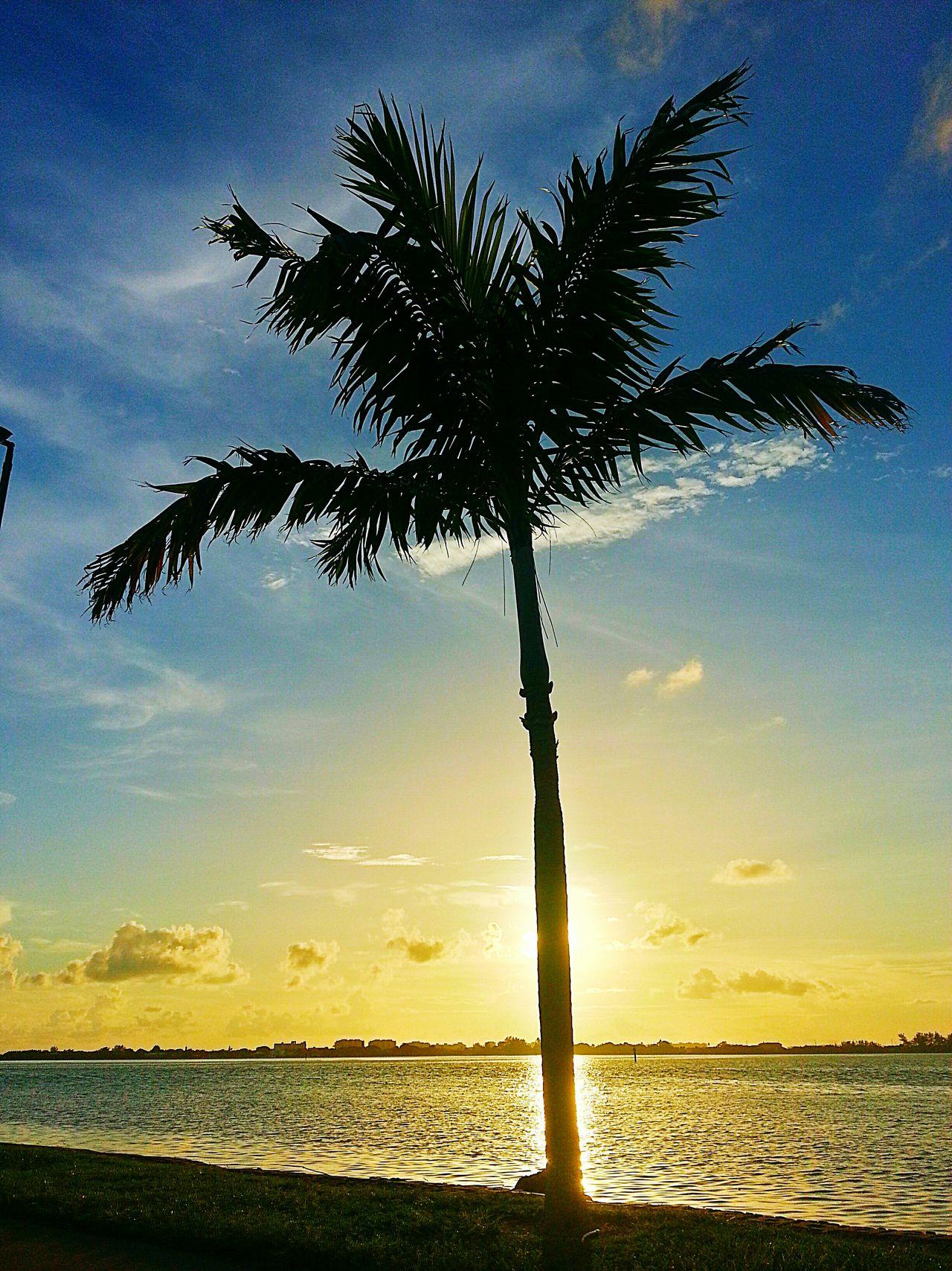 Palm Trees Sunset Sunset_collection Sunset Silhouettes Eye4photography  EyeEm Best Shots EyeEm Best Edits EyeEm Best Shots - Sunsets + Sunrise