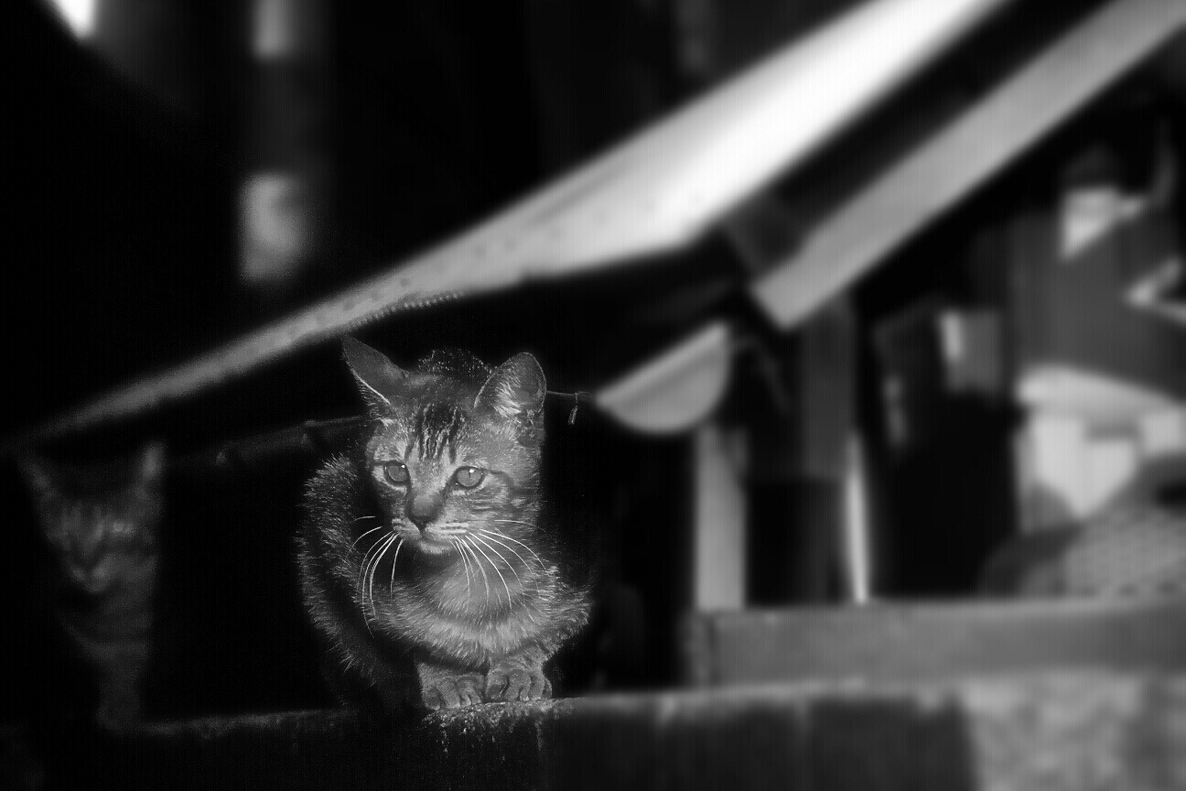 animal themes, focus on foreground, one animal, selective focus, indoors, close-up, domestic cat, mammal, domestic animals, cat, no people, feline, wood - material, day, whisker, pets, animal head, metal, wildlife