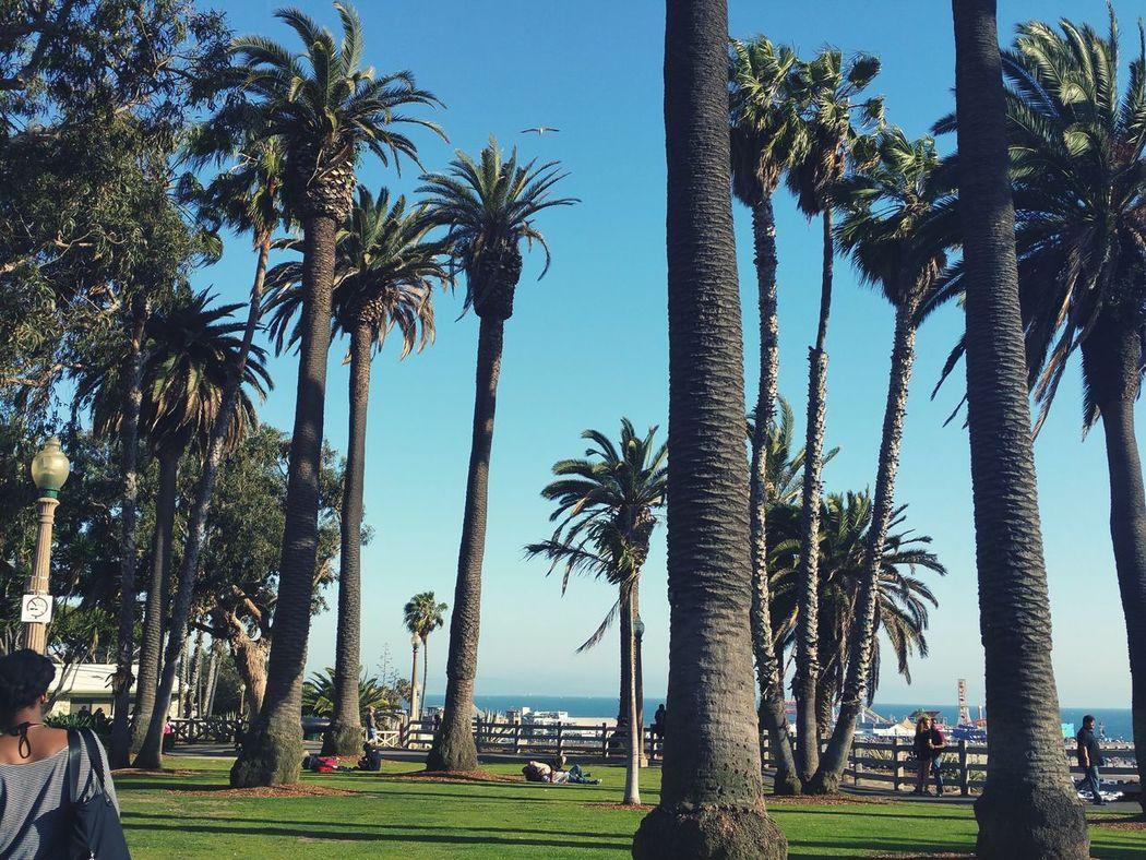 Venice Beach Losangeles California Foreversummer