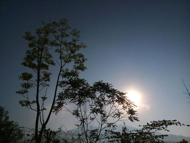 TreePorn Enjoying The Sun Beautiful Day Peace And Quiet Phoneography Early Morning Sunrise EyeEm Malaysia EyeEm Nature Lover Malaysia