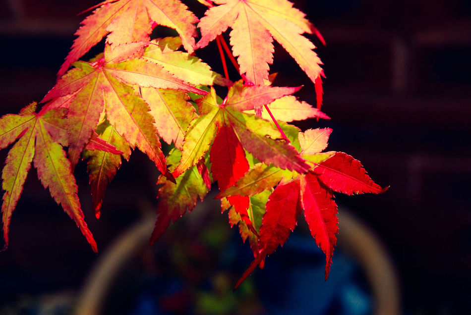 Beauty In Nature Close-up Day Focus On Foreground Garden Photography Leaf Nature Plants SummerPlant Vibrant Color