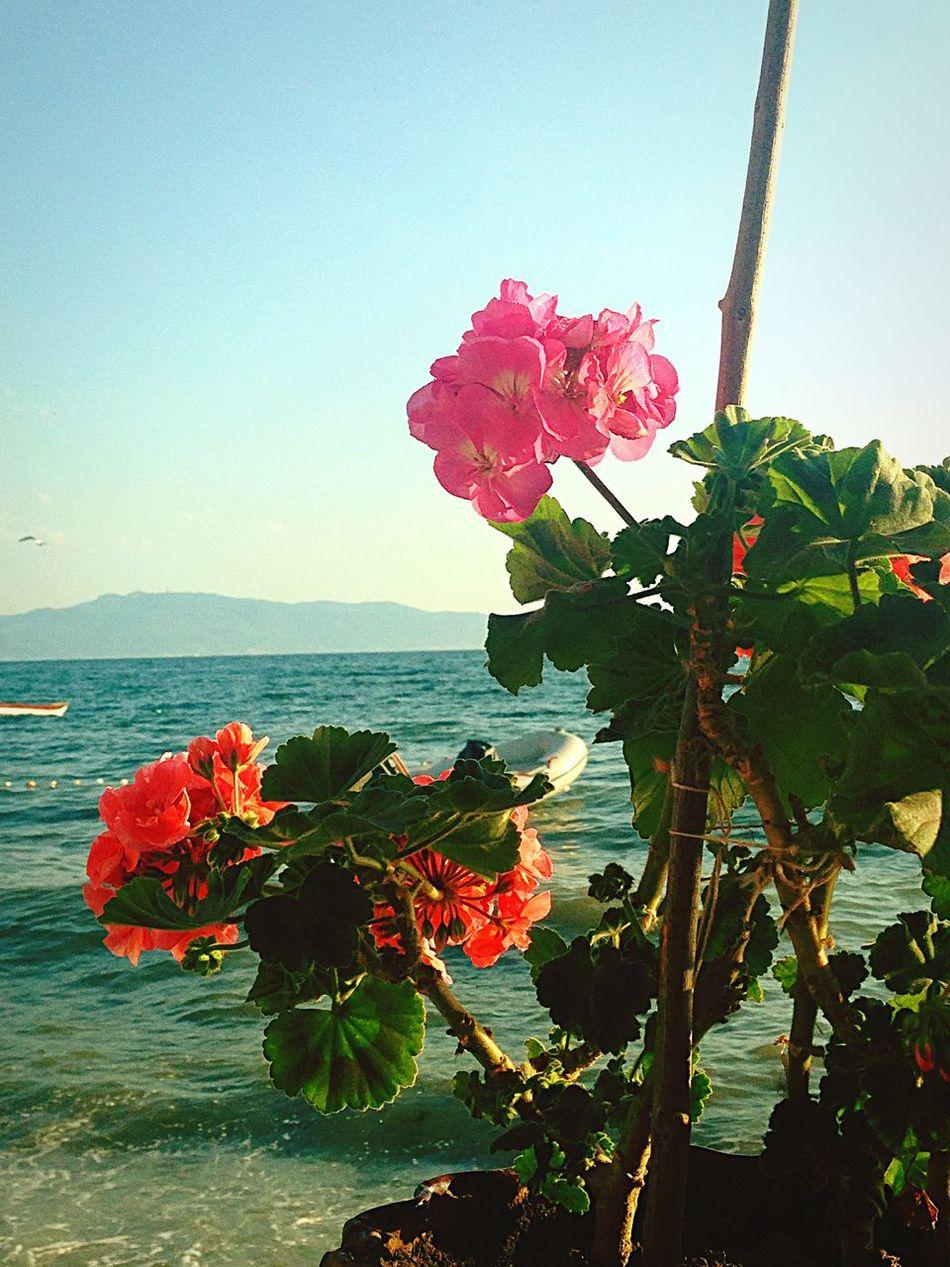 Enjoying The Sun Sea Relaxing Flowers Marmarasea Beautiful Day Enjoying Life Hello World Weekend