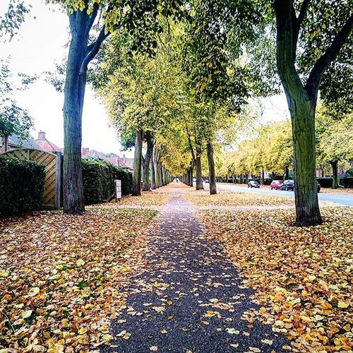The Broadway in Letchworth Garden City.. TheBroadway Broadway Letchworth Letchworthgardencity Hertfordshire Autumn Leaves Autumncolours Trees Path Perspective ican Capture Snapshot Sonyxperia
