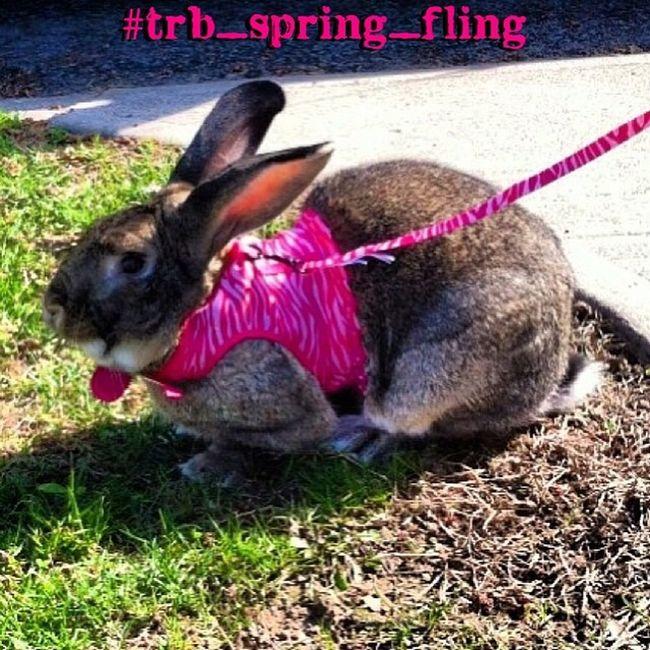 Trailblazers_rurex Trb_spring_fling