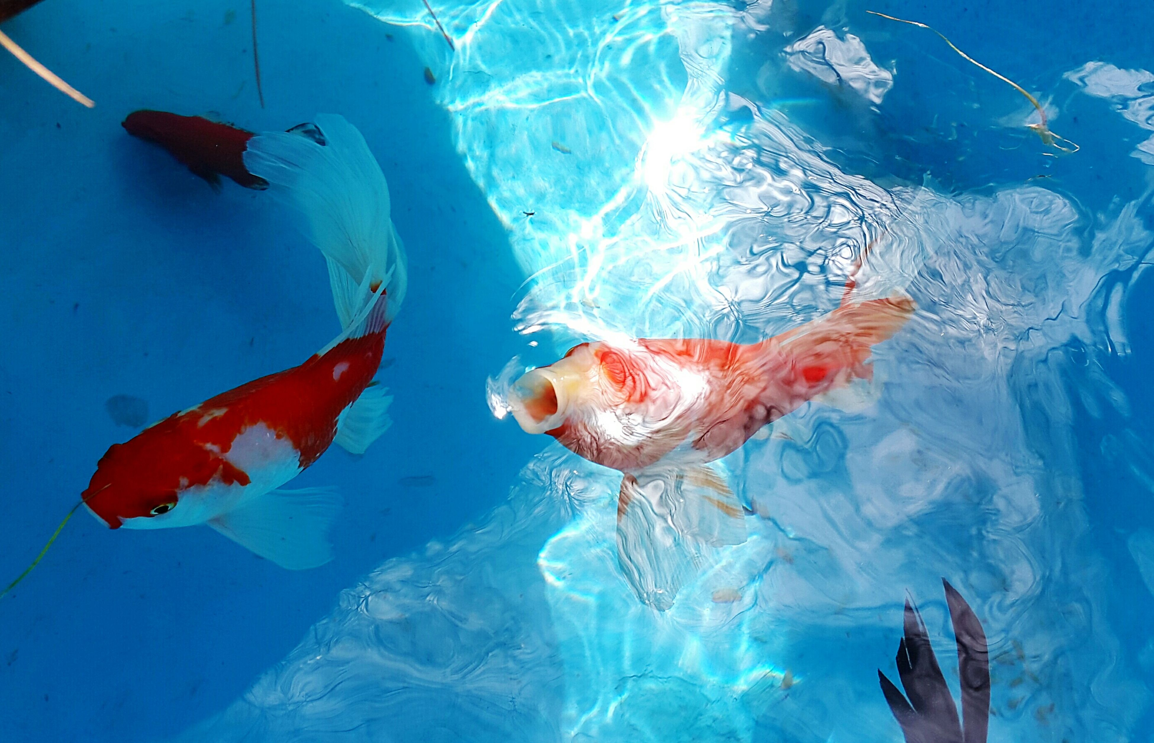 underwater, swimming, water, fish, animal themes, sea life, blue, undersea, animals in the wild, wildlife, sea, transparent, school of fish, one person, nature, one animal, leisure activity, aquarium, beauty in nature