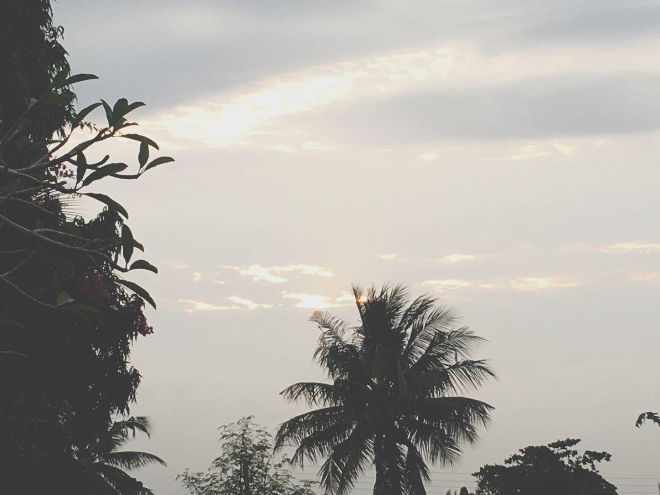 Love the Palms!