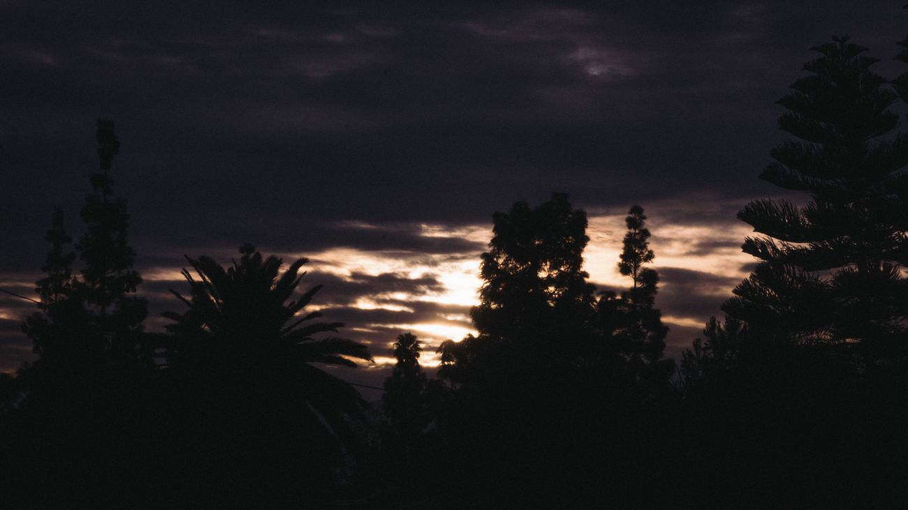 Sunrise PT.2 Nature Silhouette Tree Sky Scenics Outdoors Tranquility Cloud - Sky Supremenyc Supremeshooters Palace Supreme Sony α♡Love Sony A6000 Sonyalpha No People