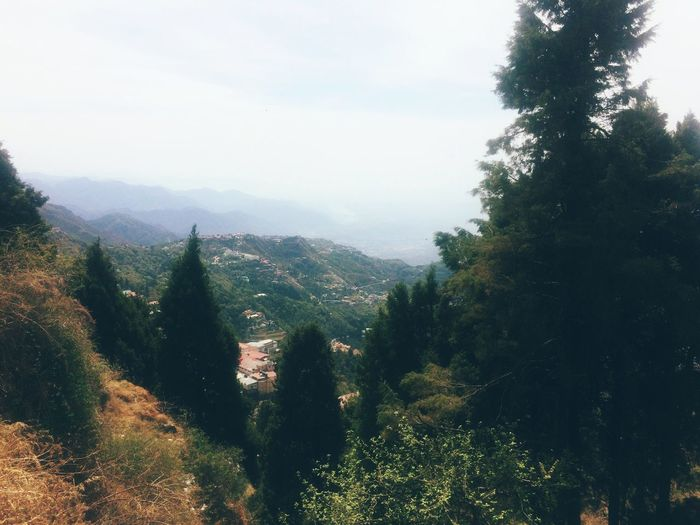Mountain Nature Tree Forest Scenics Landscape Beauty In Nature Growth Tranquility No People Sky Outdoors EyeEmNewHere