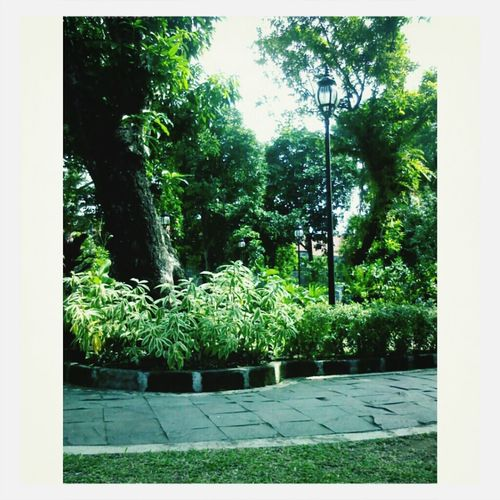 Nature :) First Eyeem Photo