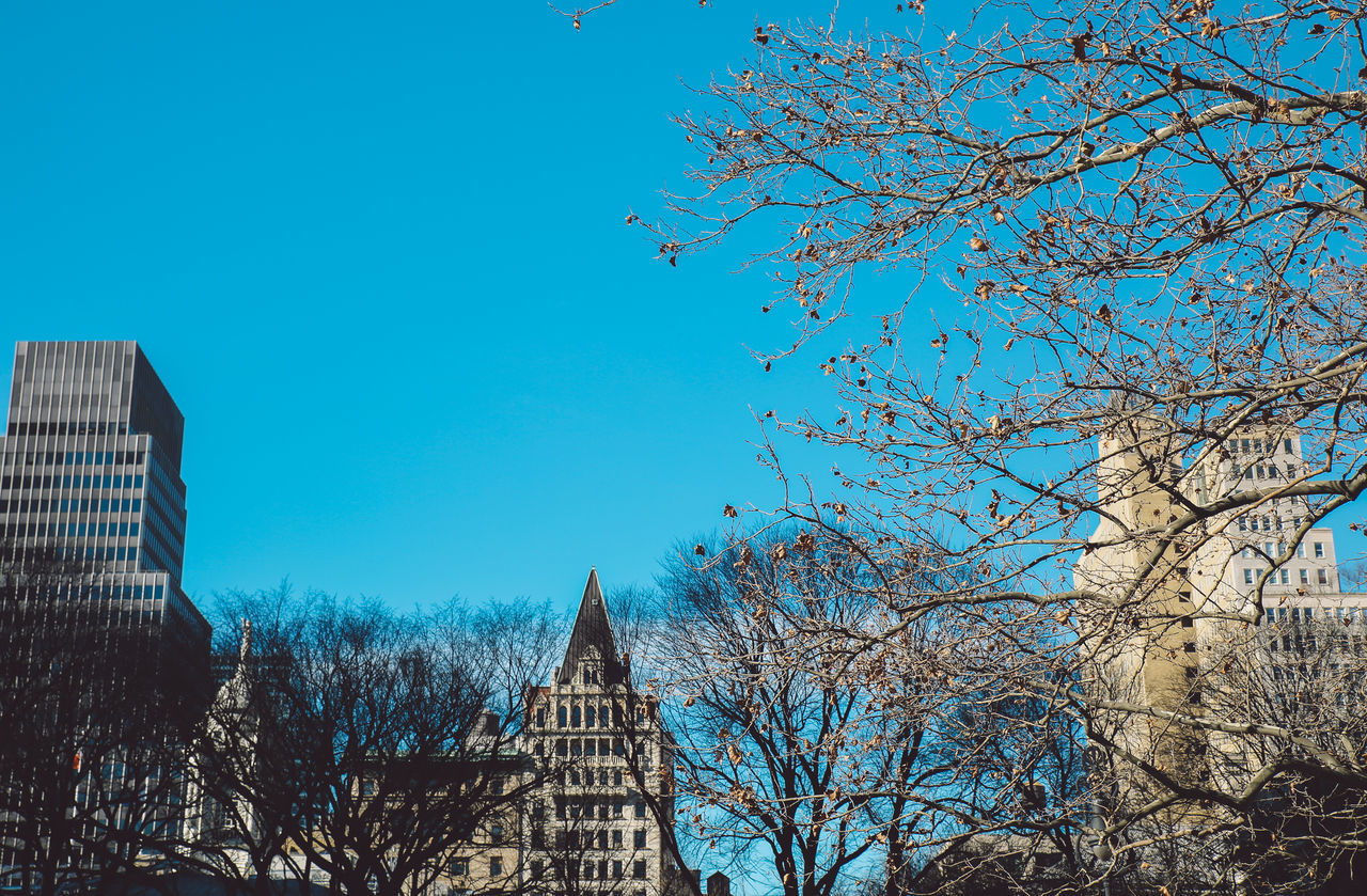 architecture, bare tree, built structure, tree, blue, building exterior, day, branch, outdoors, no people, low angle view, sky, travel destinations, nature, clear sky, city, beauty in nature