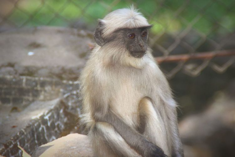 Animal Photogenic  Poseforthecamera Animals In The Wild Seriousface Click Inocence  Model Pose Modeling Monkey Animal Animal Wildlife Ape Animals In The Wild Mammal Outdoors Close-up Day No People Nature