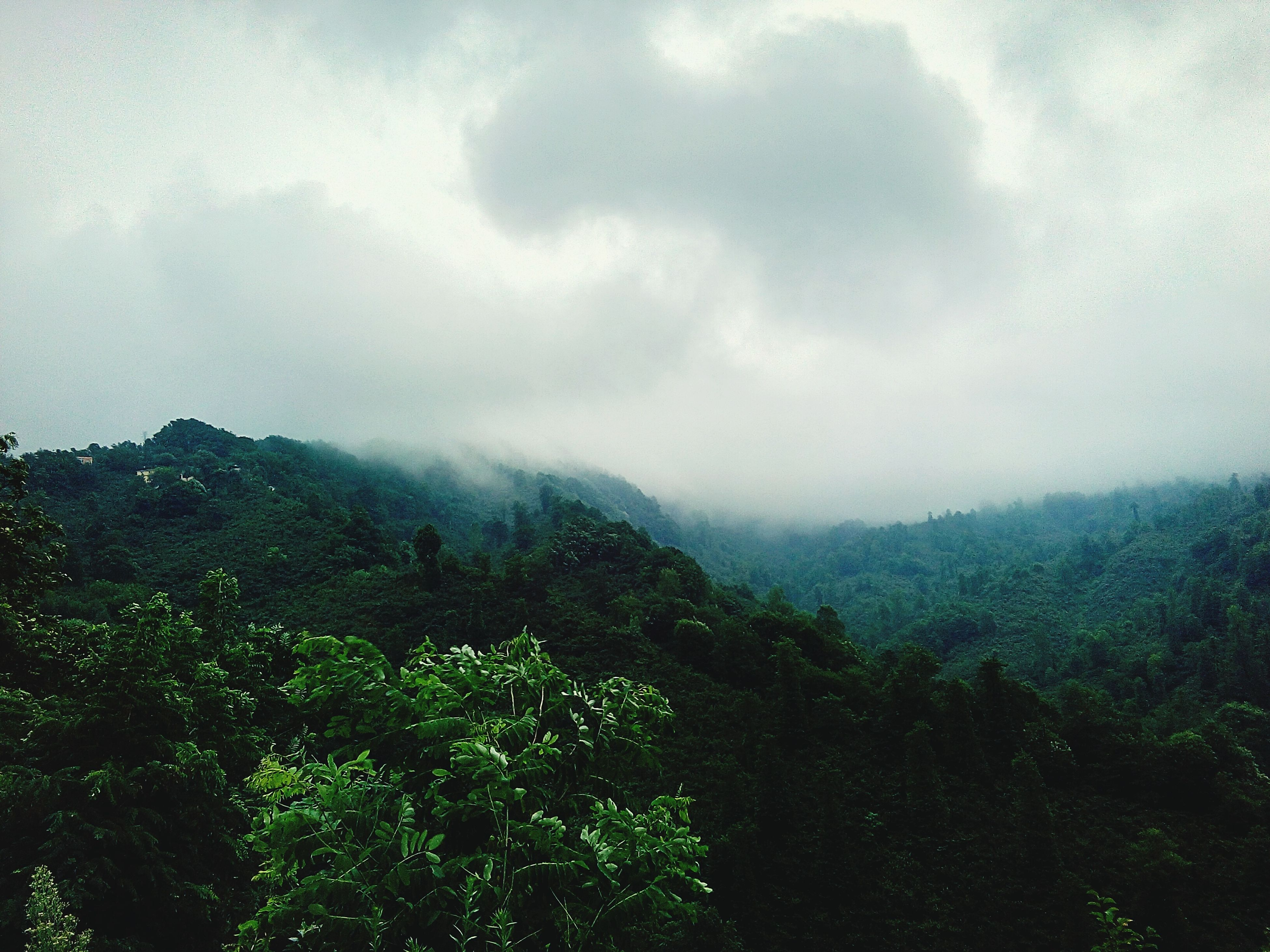 mountain, tranquil scene, tranquility, sky, scenics, beauty in nature, landscape, mountain range, nature, cloud - sky, growth, tree, cloudy, non-urban scene, green color, idyllic, cloud, plant, weather, day, outdoors, remote, hill, no people, lush foliage, non urban scene, grass, overcast, horizon over land, green, majestic