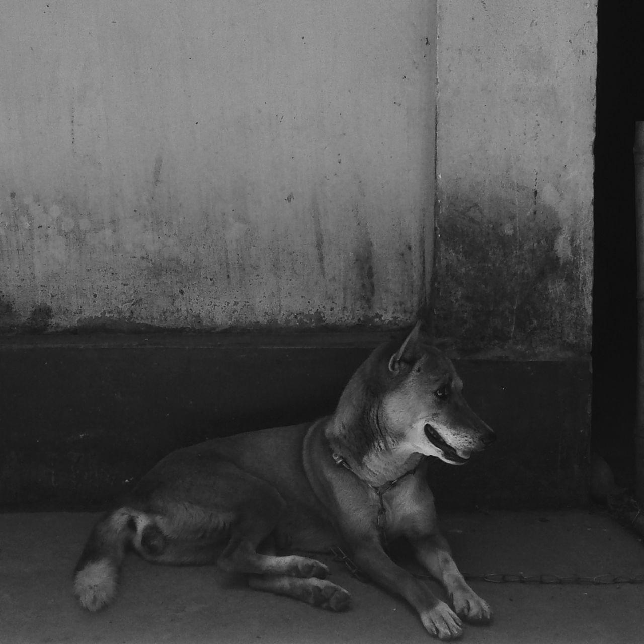 Hqpy sunday Bestoftheday Tones Bestshot EyeEmBestPics Adventure Club EyeEm Best Shots India Hello World EyeEm Gallery Wanderlust VSCO Nature_collection Friendship Dog