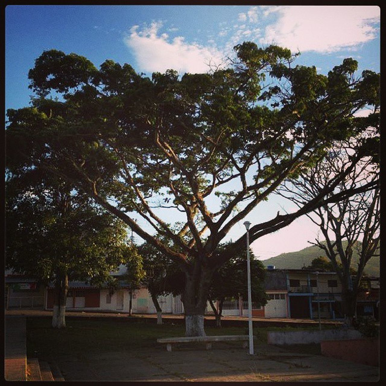 Dotspin Betosalvestrini Art Original Natural Nature Plants Peace Tree Forest Venezuela Sanjuandecolon