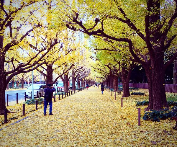 外苑銀杏並木 神宮外苑いちょう並木 外苑前 東京 Tokyo Tokyo,Japan Autumn Autumn Colors Enjoying Life Relaxing Hello World Autumn Leaves