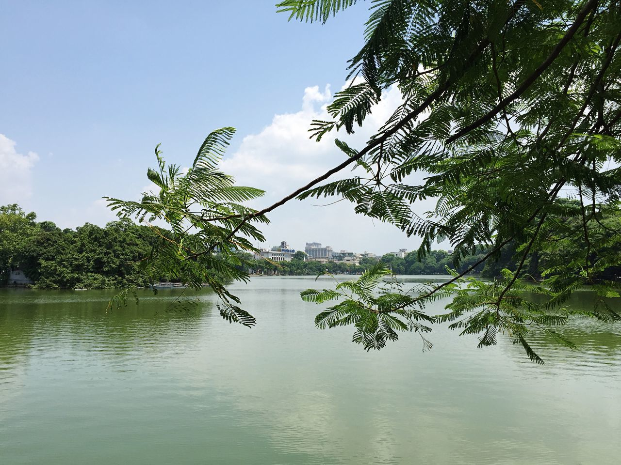 Beautiful stock photos of vietnam, Beauty In Nature, Branch, Day, Green Color