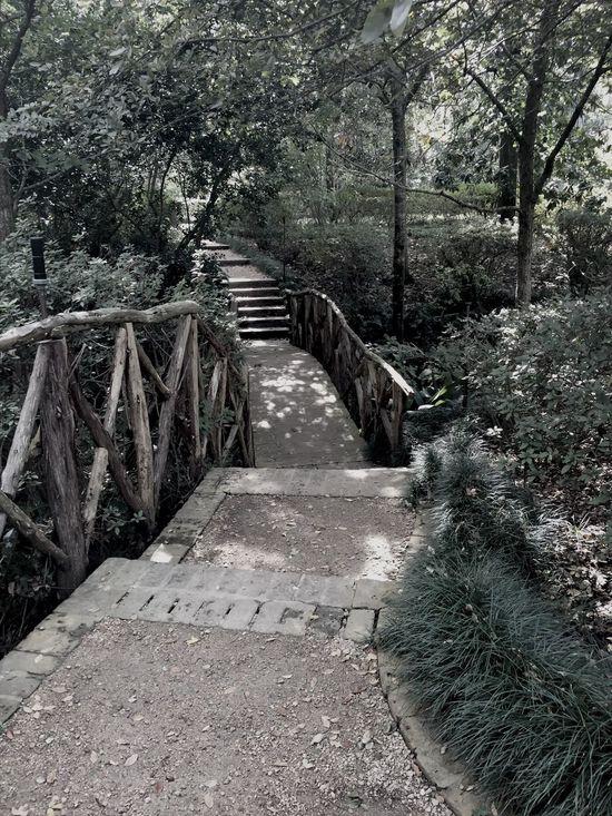 Bridge Nature