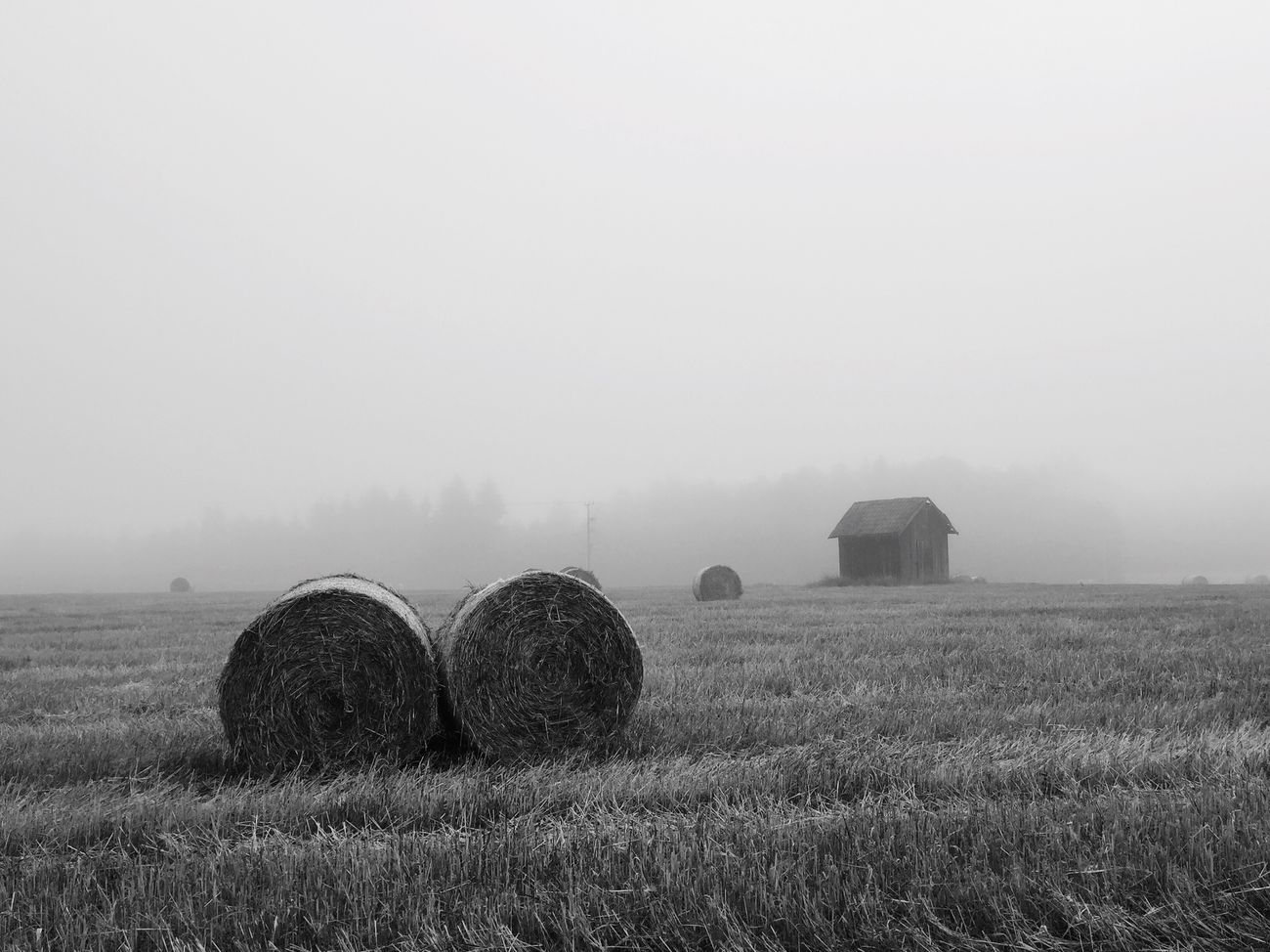 For the love of September Rural Scene Bale  Hay Agriculture Field Tranquil Scene Farm Harvesting Tranquility Weather Fog Landscape Nature Sky Scenics Beauty In Nature Foggy Grassy Outdoors Solitude