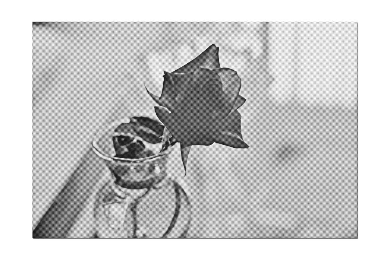 Rose and Vase 5 Still Life Abstract Rose♥ Monochrome Photograhy High-key Halftone Halftonefilter Crystal Bowl Vase Glass Table Diffused Light Light-Play Monochrome Black & White Black And White Photography Black And White Black And White Collection  Grayscale
