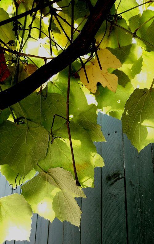 Hello World My Early Morning Lookingforcalmness Myworld Greengoodness Tomyfriendsallover